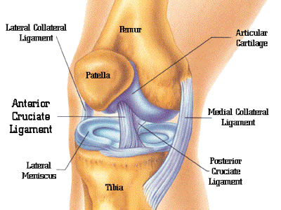 Knee Pain Treatment in Gaithersburg MD